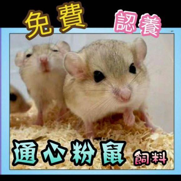 【Happy 鼠】 通心粉鼠飼料 認養 肥尾沙鼠 埃及沙鼠 營養均衡新配方 倉鼠主食 沙鼠 老公公