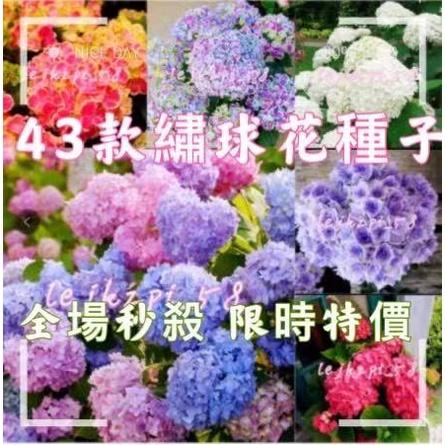 43款繡球花 (種子) 繡球 (種子)八仙花種子 無盡夏種子