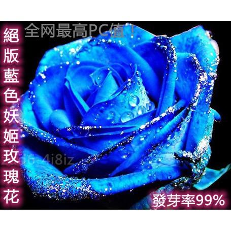 ✨臺灣發貨✨ 1元1粒  玫瑰種子  藍色妖姬玫瑰花種子 全網最高PC值!玫瑰花種子 玫瑰花種籽  超低價格