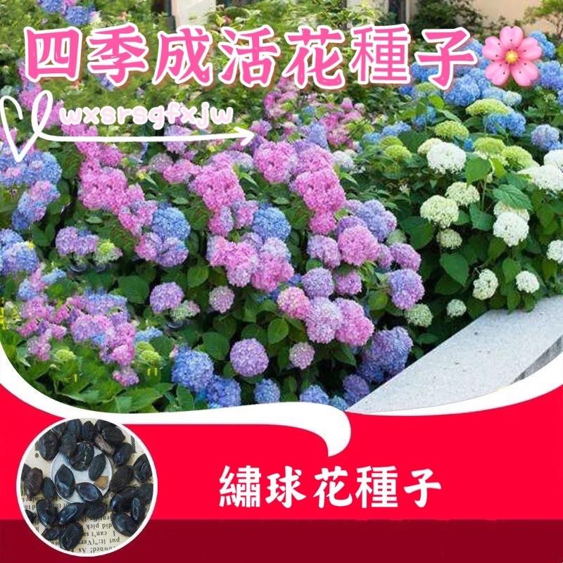超低價#19款繡球花種子 繡球花種籽 任你挑選🌸 發芽率高達99% #無盡夏