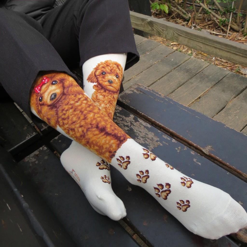 【台灣製造】現貨 可愛狗狗 紅貴賓 泰迪犬 貴賓狗 狗狗襪 狗狗配件 動物襪 襪子 男襪 女襪 長襪 綿襪 小腿襪 中筒