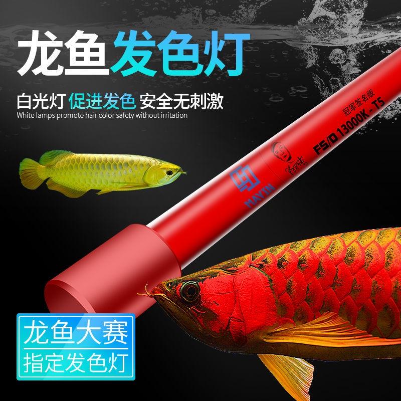 馬印13000K發色燈三基色 紅龍魚專用水族魚缸照明燈