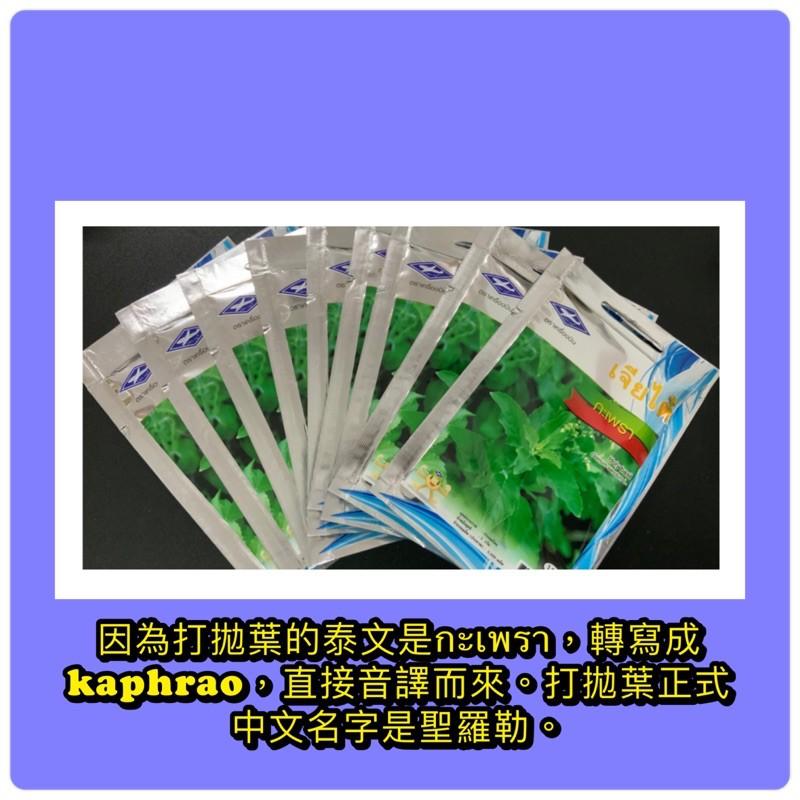聖羅勒種子/每份30-35粒還附種子保存罐/泰國打拋葉種子/泰國九層塔/กะเพรา/kaphrao/