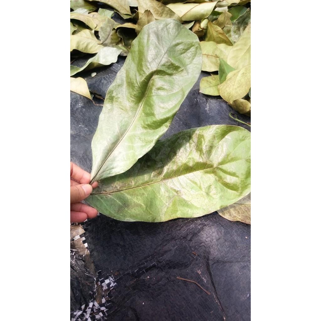 現貨 刺果番荔枝葉,可以泡茶 山刺番荔枝葉片 羅李亮果日本釋迦洗好乾燥刺果葉500克