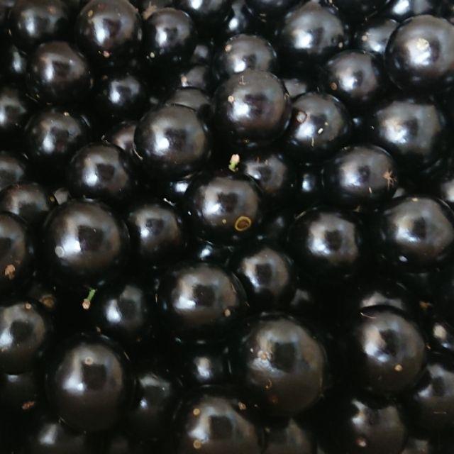 2021/12月起預購~新鮮樹葡萄!現採即出 樹葡萄 嘉寶果鮮果果實可直接食用!1斤50元