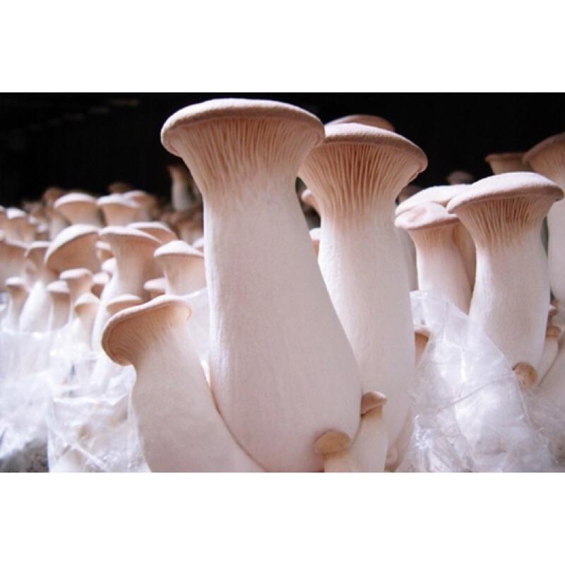 農場有機杏鮑菇 🍄Organic King Oyster Mushroom 好市多 杏鮑菇 有機 產地直送