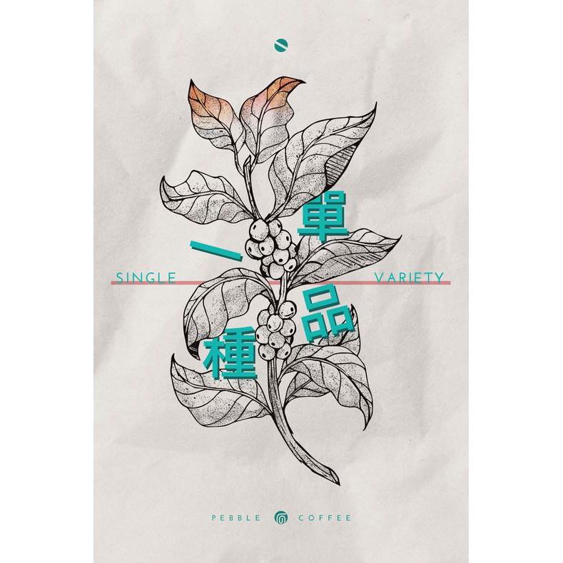 衣索比亞  水洗  西達摩  單一品種74110  G1  20/04批次  生豆*1KG