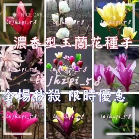 玉蘭花種子  四季開花 濃香型 紅黃白紫玉蘭樹苗 廣玉蘭花苗綠化花種子