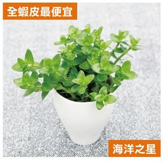 【嚴選花草Chioce】全蝦皮最便宜