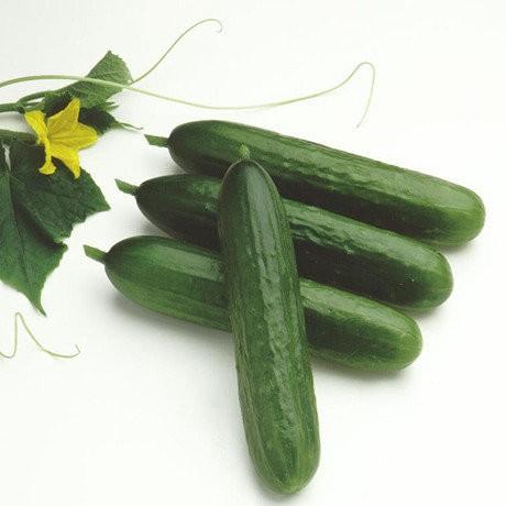 【媽咪蔬果園】荷蘭水果小黃瓜   種子