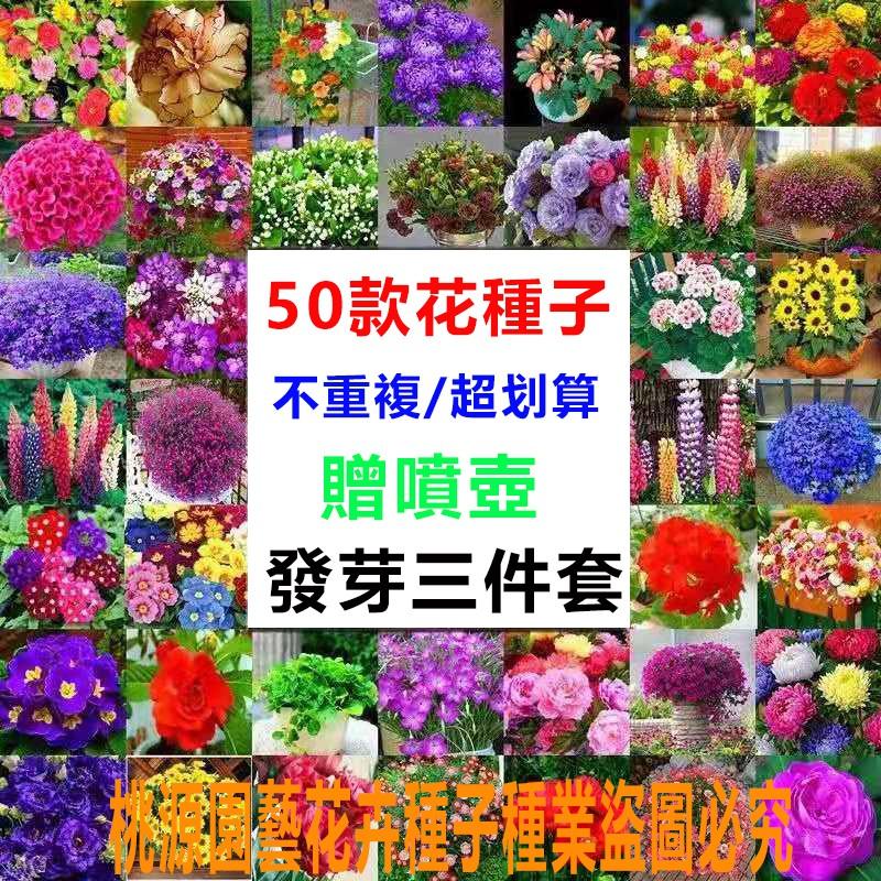 【現貨50款花卉種子】梔子花種子 水草種子 波斯菊種子 牡丹種子 玫瑰種子 海棠種子 滿天星種子 梅花種子 四季花卉種子