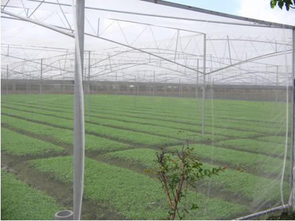 《上禾屋》3尺白網/防蟲網/紗網/溫室用網/農業用塑膠網/木瓜網/蔬菜網/圍籬網32目