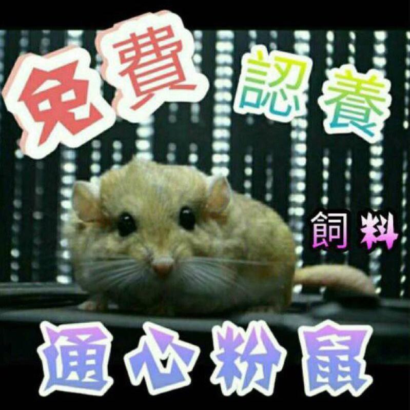 【鼠寶一家】 通心粉鼠飼料 認養 肥尾沙鼠 埃及沙鼠 營養均衡新配方 倉鼠主食