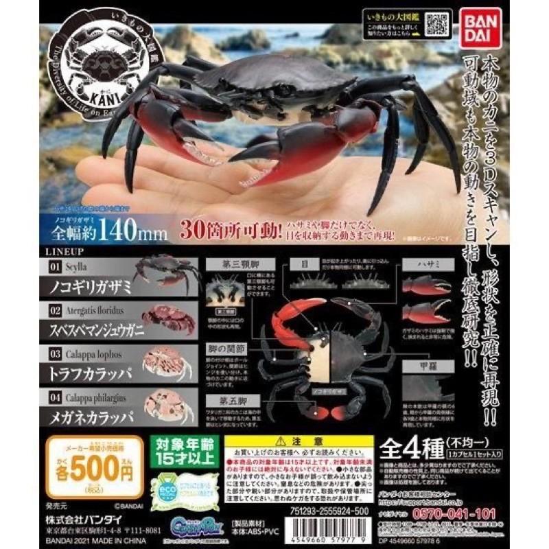 現貨 Bandai 環保扭蛋 螃蟹 生物大圖鑑 饅頭蟹 昆蟲 蜜蜂 烏龜