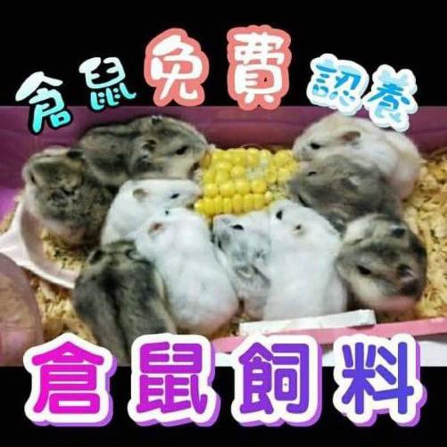 【Happy 鼠】倉鼠飼料 認養 三線鼠 銀狐鼠 布丁鼠 黃金鼠 倉鼠主食 寵物果凍