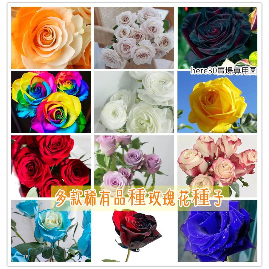 玫瑰花種子 玫瑰花種籽 玫瑰種子 (限時特價 壹元一粒) 薔薇種子