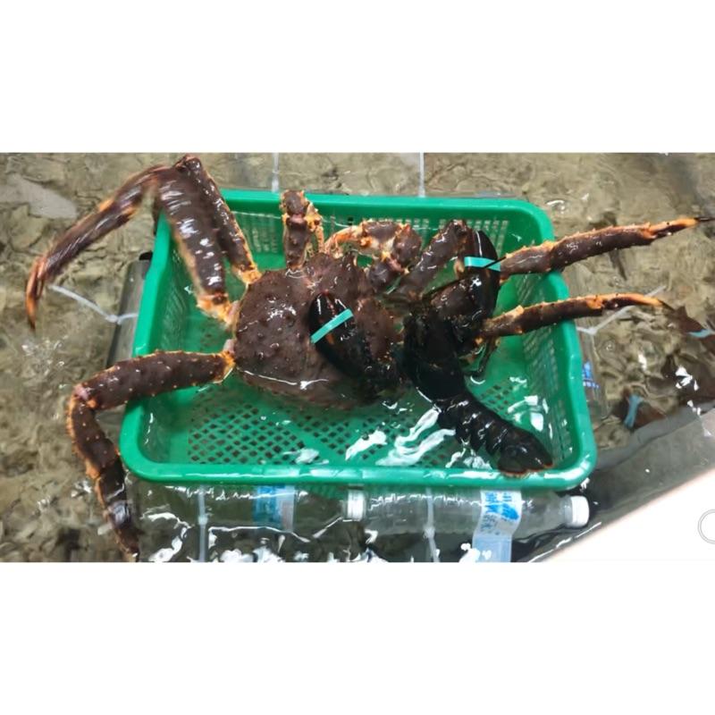 聊聊洽談!甜甜價 北海道 活體養殖 帝王蟹 活體 波士頓龍蝦 海鮮 水產 生猛海鮮 生鮮水產 中秋烤肉