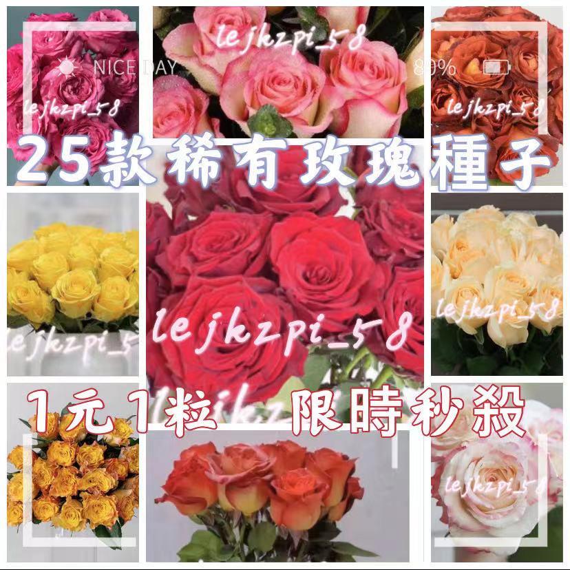多款稀有玫瑰花種子 玫瑰種子 玫瑰花 月季種子 薔薇種子 爬藤玫瑰種子