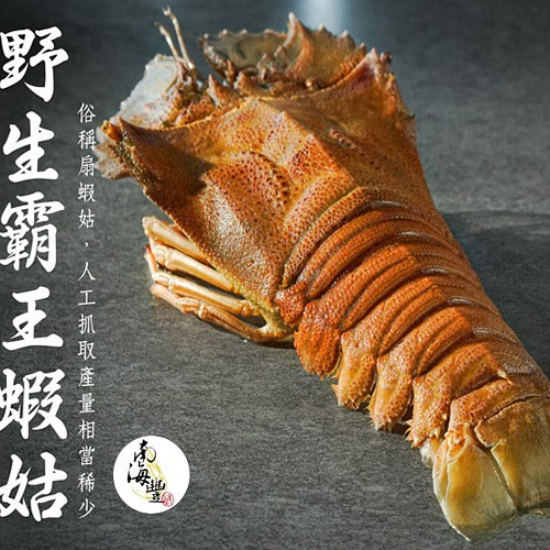 大size 南海豐【野生霸王蝦姑】400g~450g/尾,頂級蝦姑排,鮮甜多汁,肉質媲美龍蝦紮實好吃