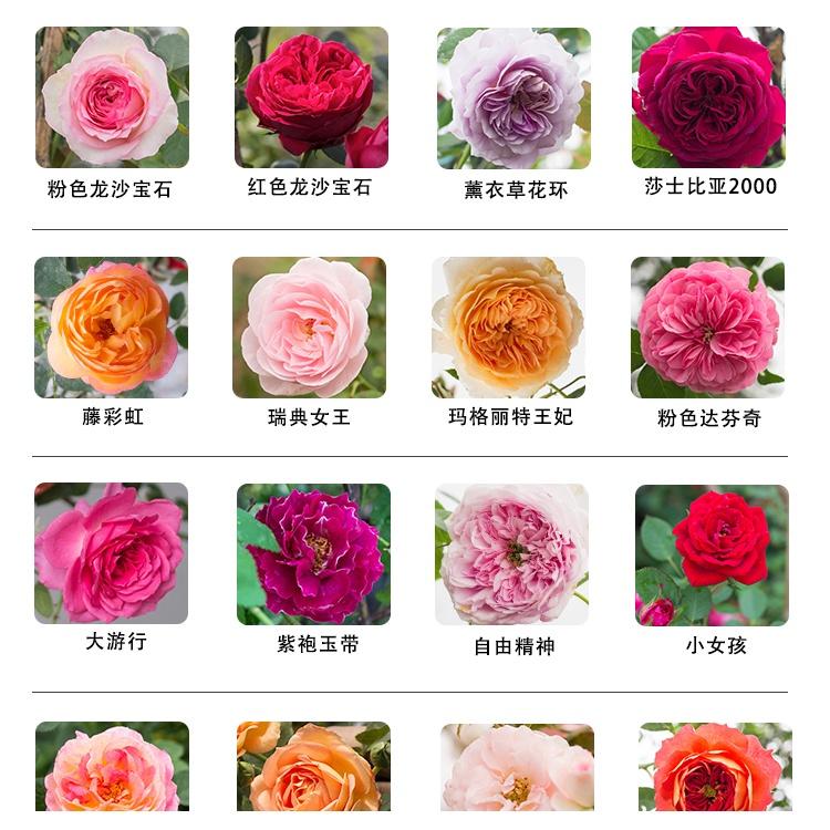 可食用玫瑰花種子籽 梅桂花玫瑰花籽 花種籽子 四季種孑 月季薔薇