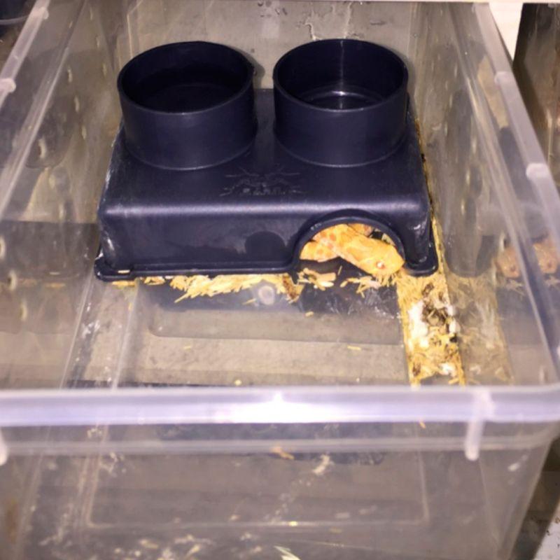 yal多功能爬行動物餵食器3合1餵食碗飲用水食物浴室浴室隱藏