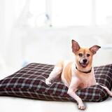 。Circle Cat。Cotsco 好市多代購 KuddleKrew 毛得舒 防水寵物床墊 兩色可選 宅配免運