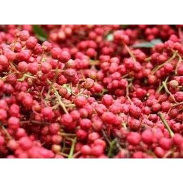 農產 大紅袍 大紅袍花椒種子  種子 (蔬果類種子)每包約10粒/M2044