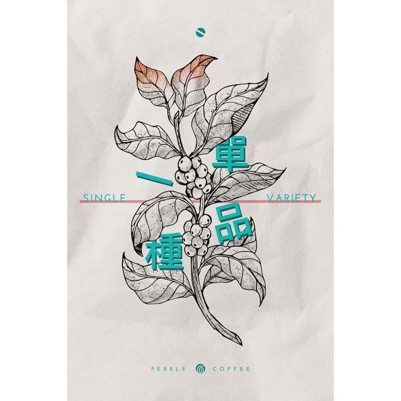 花咖啡 衣索比亞 水洗 西達摩 單一品種74110