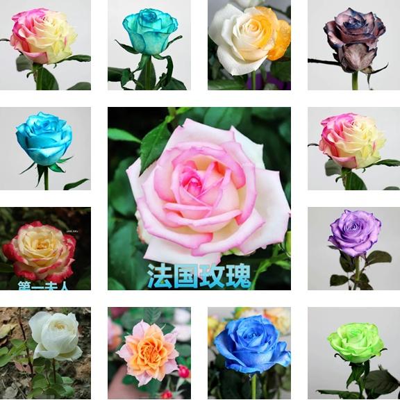 臺灣發貨 玫瑰花種子超低價格 玫瑰種子 玫瑰花種子 玫瑰種子  多肉種子草莓種子碗蓮種子  庭院玫瑰花盆栽