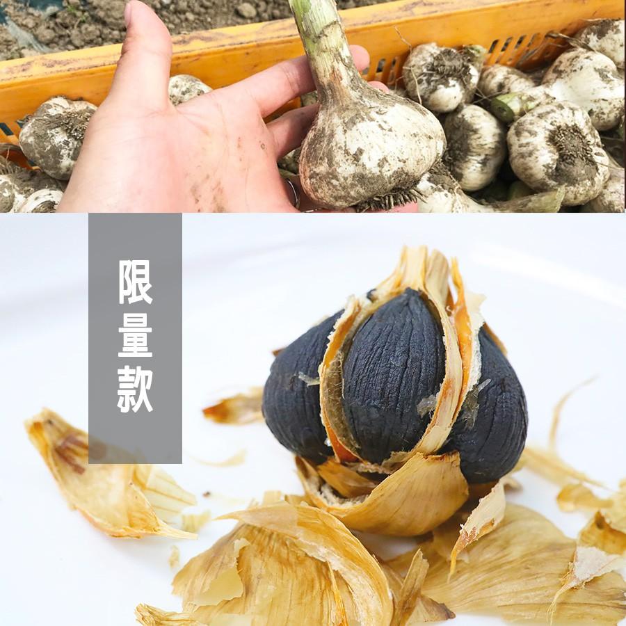 日本 青森 熟成黑蒜頭 限量【Ms球*30球/包】現貨 養生 黑蒜頭 黑金