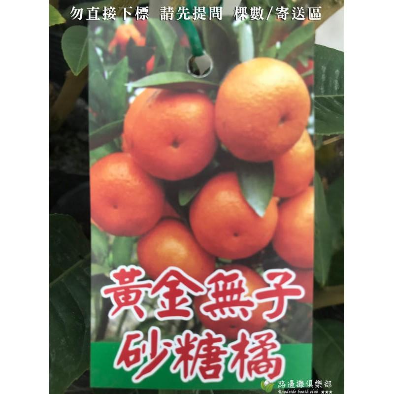 砂糖橘 十月桔 沙糖橘 沙糖桔 砂糖桔 砂糖蜜橘 沙糖蜜桔 無子砂糖桔 黃金沙糖橘 黃金沙糖蜜桔 砂糖橘樹苗 盆栽 少籽