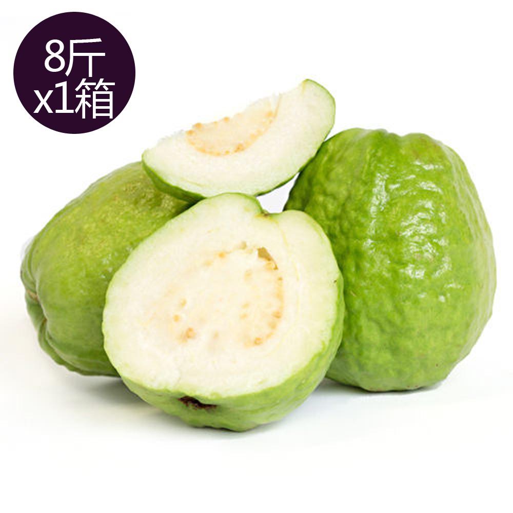 【果之家】燕巢牛奶珍珠芭樂8台斤(1箱/約9-13顆)