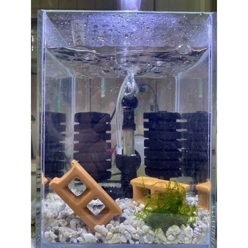 澳洲純藍/純藍 鈷藍黑魔/黑色膠囊 青花瓷 《清倉大拍賣!!套缸+螯蝦》螯蝦 魚缸 套缸 龍蝦 水妖精 馬達