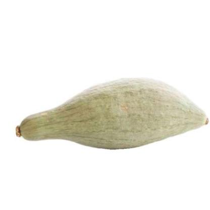 貴族甜板栗貝貝小奶油蜜香芋巨型南瓜種子種籽孑特大四季高產