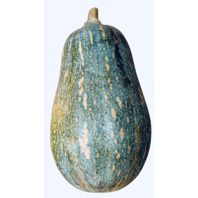 [優良種子]木瓜形南瓜,阿成南瓜,好種高產量!一兩(約500粒)~半磅裝