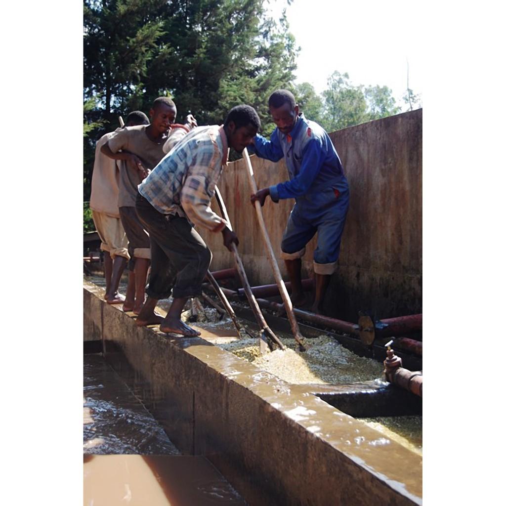 熊團長系列: 2020產季10月 衣索比亞 耶加雪菲 Hafursa 水洗G1 --甜蜜花微批次 (可代烘+生熟豆均有)
