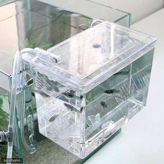 小郭水族-日本 SUDO -STARPET【 S-5830 外掛式產卵飼育隔離箱 1.2L】隔離盒 .繁殖盒 臺中市