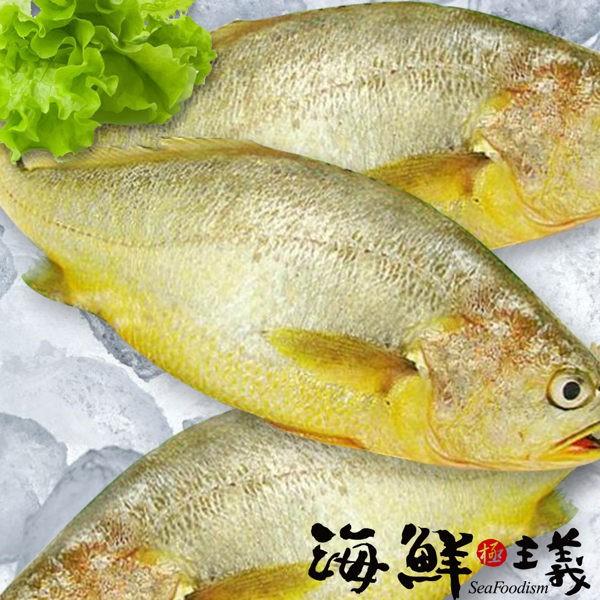 【海鮮主義】黃魚(600g/尾)
